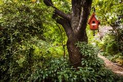 ярд белизны США дома заднего цвета птицы голубого вися красный Стоковая Фотография
