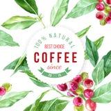 Ярлык на предпосылке с заводом кофе акварели Стоковое Изображение RF