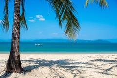 Ясная ладонь моря, пляжа и кокоса выходит Стоковое Изображение RF
