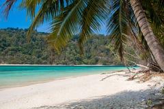 Ясная ладонь моря, пляжа и кокоса выходит Стоковые Изображения