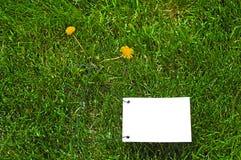 ясная белизна бумаги травы Стоковое Фото