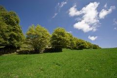 ясная весна горы стоковая фотография
