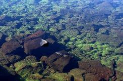 ясная вода озера Стоковое фото RF