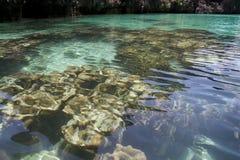 ясная лагуна коралла Стоковые Изображения