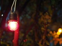 Ясная смертная казнь через повешение шарика красного света в темном кусте дерева Стоковое Изображение RF