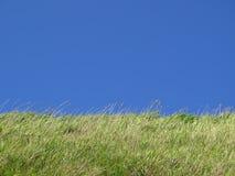 ясное небо лужка Стоковые Фото