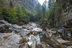 Ясное река спеша вниз в долине Стоковое Изображение RF