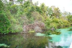 Ясное река Стоковое Фото