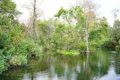 Ясное река Стоковое Изображение RF