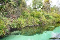 Ясное река Стоковые Фотографии RF