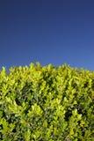 ясность выходит небо shrub стоковая фотография rf