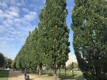 Ясные голубое небо и деревья стоковое фото rf