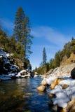 ясные древесины реки Стоковое Изображение RF