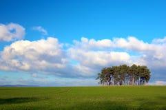 ясный ландшафт Стоковая Фотография