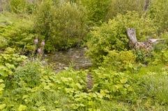 Ясный поток в лесе Стоковое фото RF