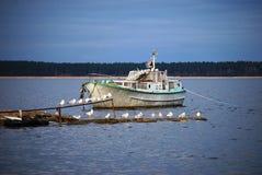 яхта белизны seabirds Стоковое Изображение RF