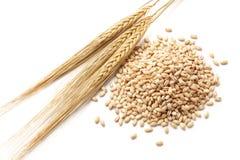 Ячмень с зернами Стоковая Фотография RF