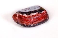 Яшма макроса минеральная каменная с гематитом на белой предпосылке Стоковое Фото