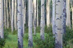 яшма твёрдой древесины Стоковое фото RF