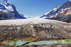 яшма icefield ледника Канады канадская columbia athabasca alberta известная большинств национальный парк принятые rockies Стоковые Изображения