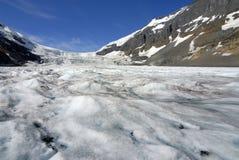 яшма icefield ледника Канады канадская columbia athabasca alberta известная большинств национальный парк принятые rockies Стоковые Фотографии RF