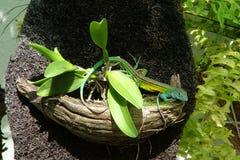 Ящерица в орхидее стоковое изображение rf