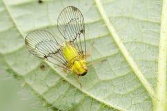 Ящерица и пчела Стоковая Фотография