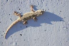 Ящерица стоковое изображение rf