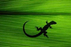 ящерица листьев Стоковое Изображение