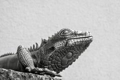 Ящерица металла серого цвета Стоковые Изображения RF