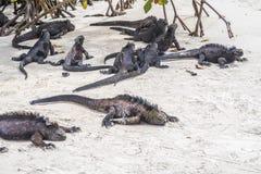 Ящерица моря на утесе на пляже Стоковая Фотография