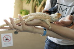 Ящерица на зоопарке Стоковые Фото