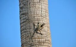 Ящерица на пальме Стоковое Изображение