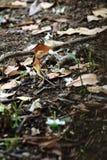 Ящерица на поле Стоковая Фотография