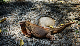 Ящерица на предпосылке красиво положенных камней на солнечный летний день стоковые фото