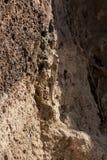 Ящерица на утесах Стоковое Фото