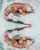 Ящерица отраженная в воде стоковые фотографии rf