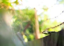 Ящерица одичалого размера skink малого тропическая в Scincidae семьи Стоковые Фото