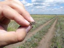 ящерица руки Стоковая Фотография RF