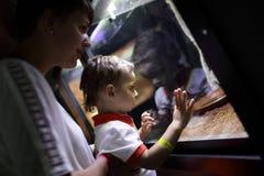 Ящерица семьи наблюдая Стоковые Изображения RF