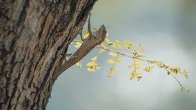 Ящерица сидя на дереве сток-видео