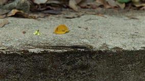 Ящерица сидя на утесе без движения на природе предпосылки тропической Закройте вверх по ящерице на каменной предпосылке внутри в  видеоматериал