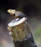 ящерица смотря вал пня Стоковая Фотография