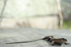 Ящерица смотря природу Стоковое Изображение