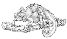 Ящерица хамелеона сидя на дереве, взгляд со стороны, Стоковое Изображение RF