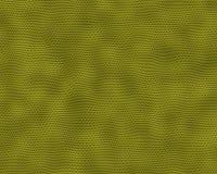 ящерица Стоковые Изображения RF