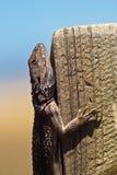 ящерица Стоковые Фото