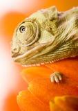 ящерица Стоковая Фотография