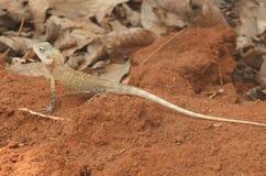 Ящерица 4 стоковое изображение rf