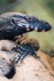 ящерица Стоковое Изображение